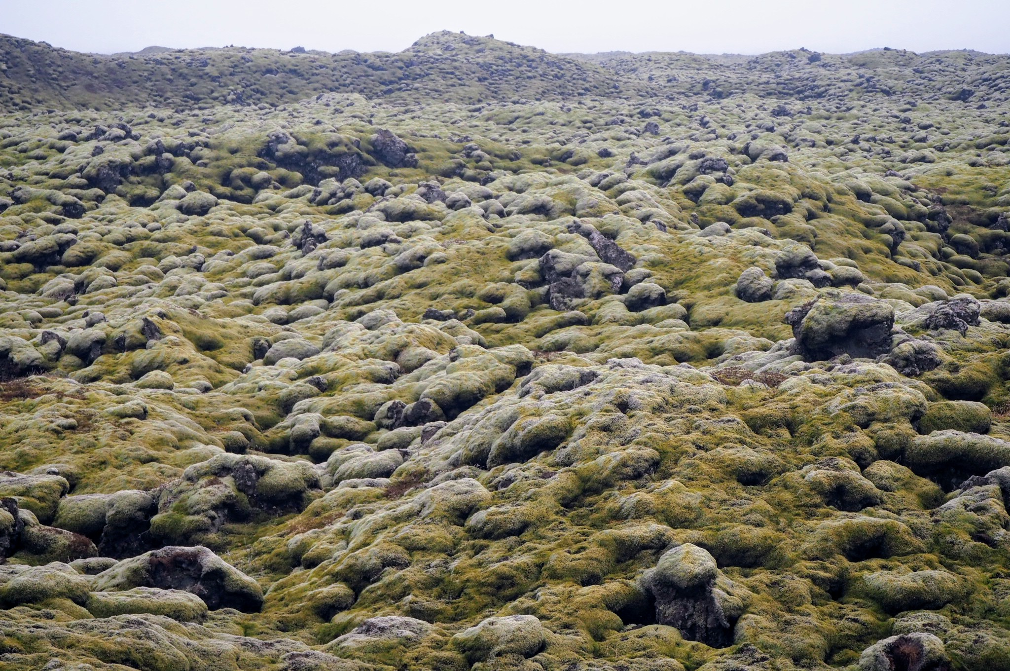 Lava fields covered in moss